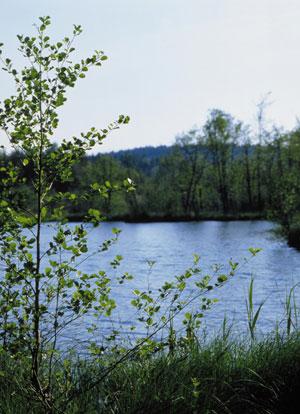 Ibmer Moor - Entspannung für die Sinne.