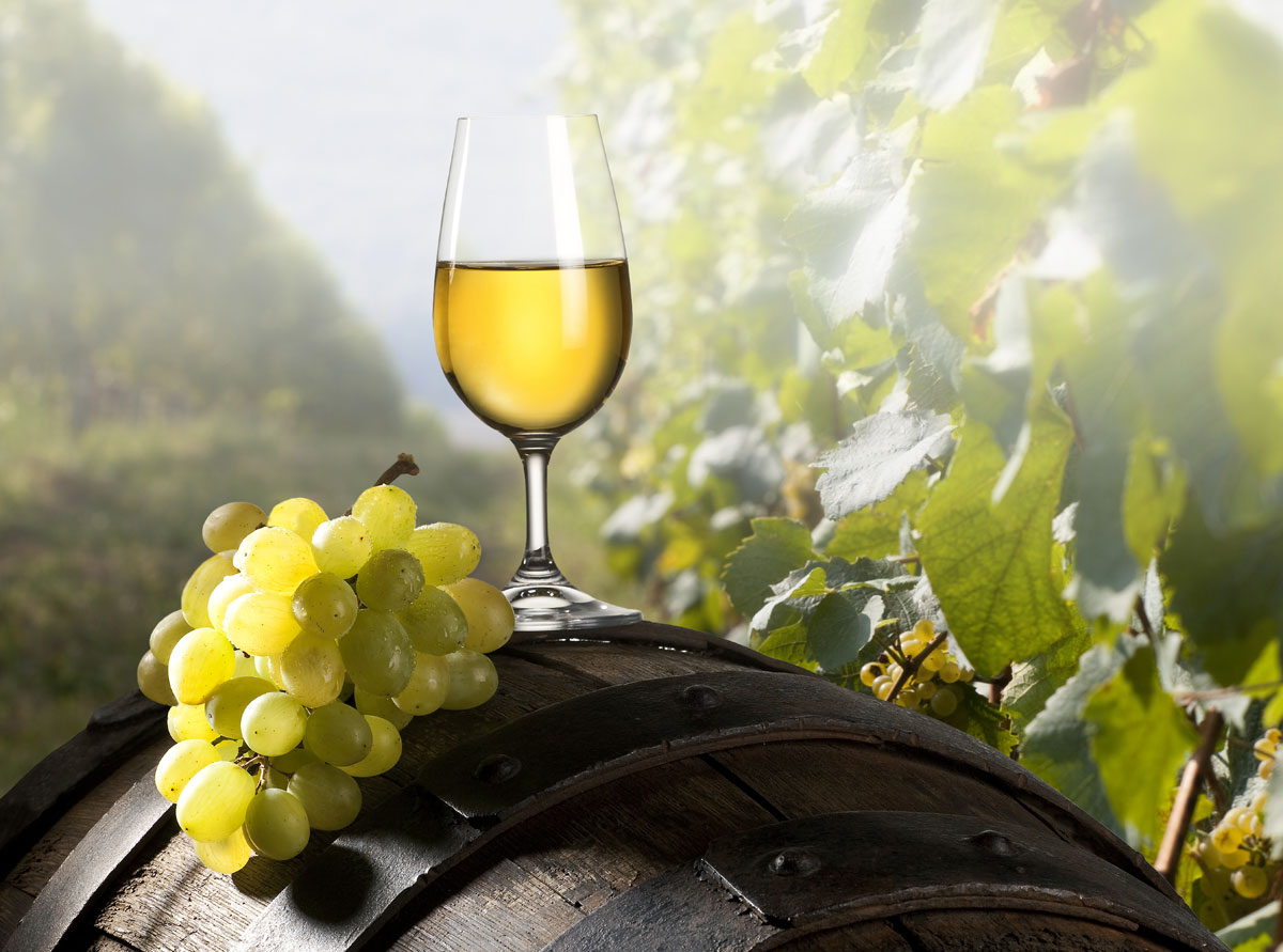 Der Boden am Csaterberg ist sandig und schottrig – eine ideale Ausgangslage für fruchtige, leichte Weißweine.